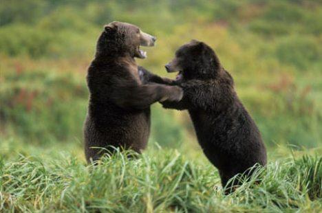 Brown Bear Waltz